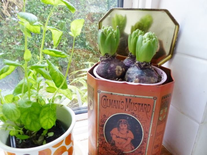 vintage tins with spring bulbs as featured in Kate Beavis Vintage Home blog